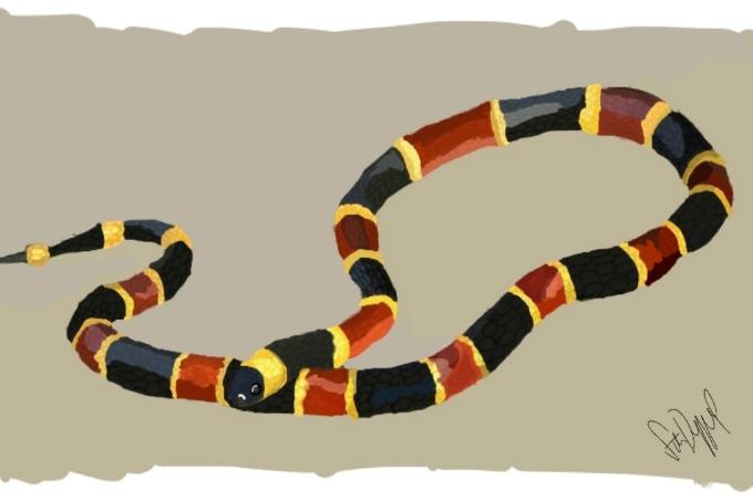 koral slange