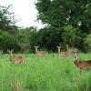 Prellah bor i en lille landsby i Kanara-distriktet. For at komme dertil, skal man køre gennem Semiuliki vildtlivsreservat. Her lever mange vilde dyr: forskellige slags hjorte og gazeller, bøfler, elefanter og aber. - Foto: Emmanuel Museruka