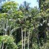Regnskoven dækker mere end 50 % af Colombias areal. Foto: CC/Wikimedia