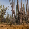 Det tørre, næsten ørkenagtige landskab mod nordøst.- Foto: Andreas Beck