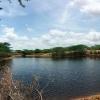 Når der stadig er vand i vandopsamlingerne  foto: Misha Wolsgarrd Iversen