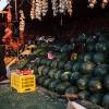 En mand sælger vandmeloner langs vejen i det nordlige Jordan. Foto: William Vest-Lillesøe