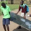 Tre drenge er i gang med at flytte en tavle. Foto: Karina Klevian