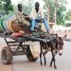 På landet er der ikke mange biler eller cykler. Mange transporterer varer og mennesker på hestevogne som her - foto: Hanne Selnæs